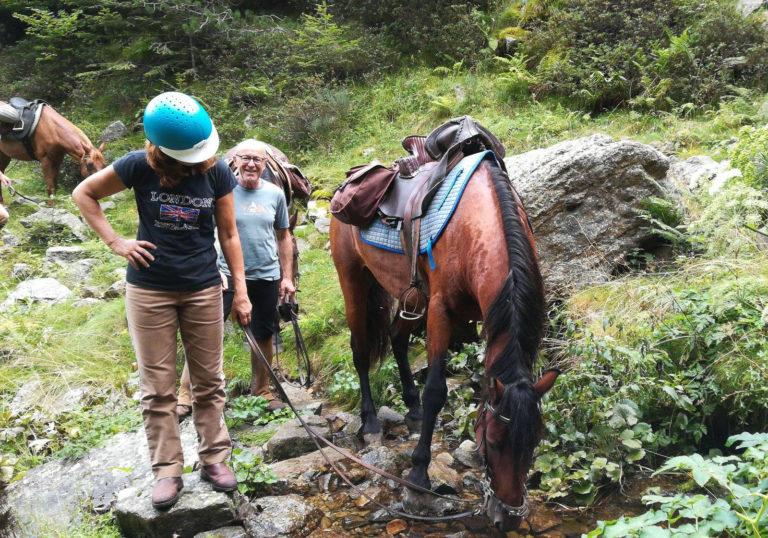 Cheval s'abreuvant à un ruisseau lors d'une randonnée équestre