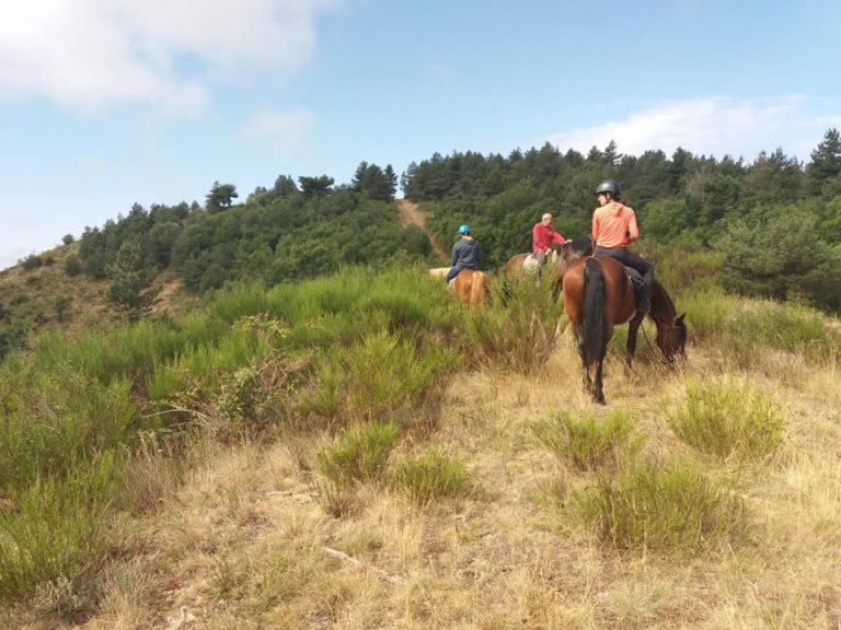 Évasion en pleine nature avec des chevaux