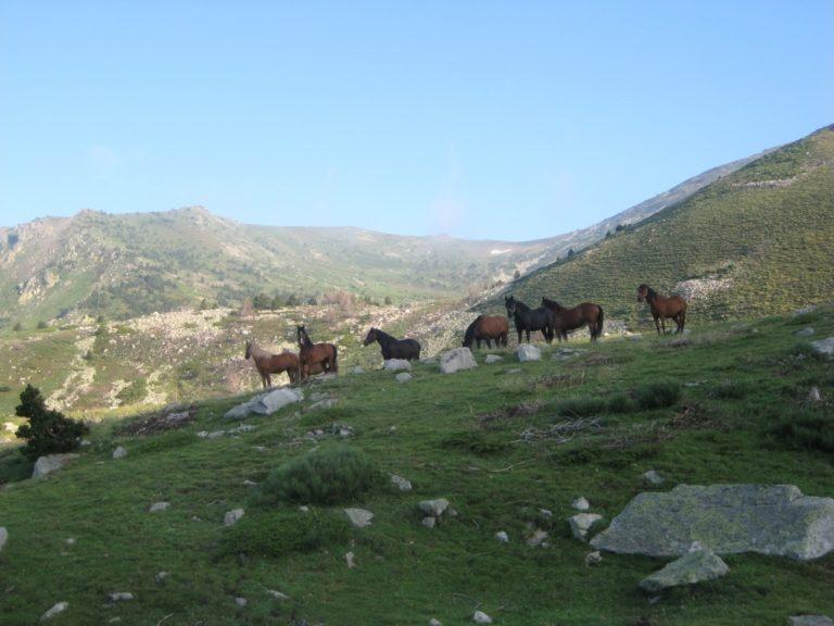 Groupe de chevaux dans la montagne