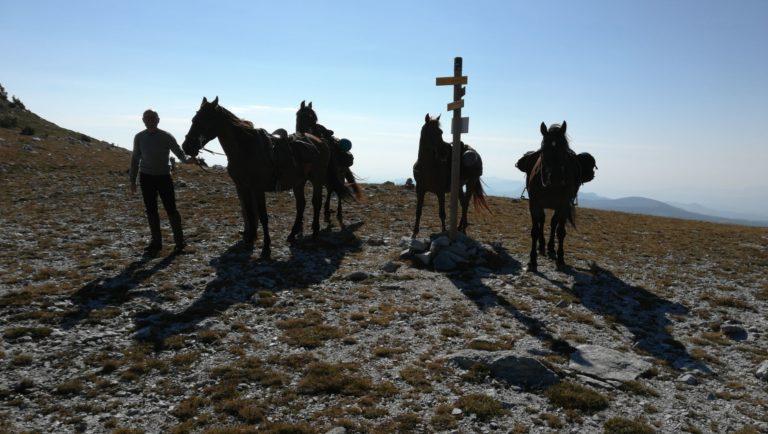 Excursion avec des chevaux au sommet d'une montagne