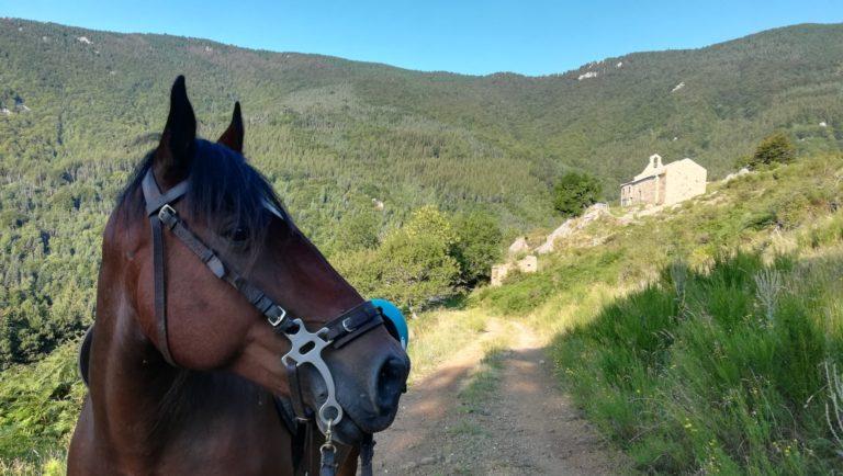 Randonnée à cheval sur un sentier de montagne